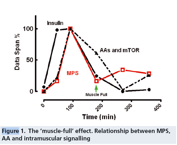 muscle full effect